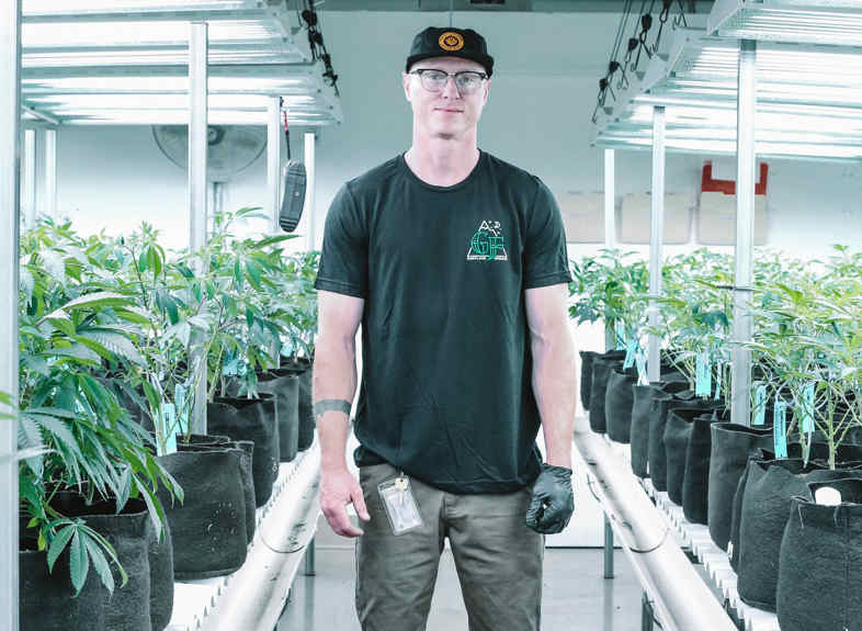 Graines de cannabis en intérieur