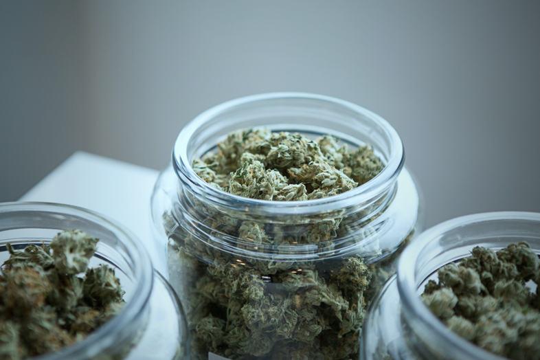 La plus chère collection de graines de cannabis 2