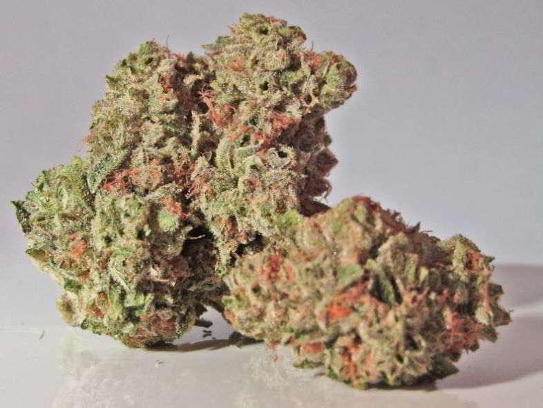 À quoi servent les trichomes dans les plants de marijuana