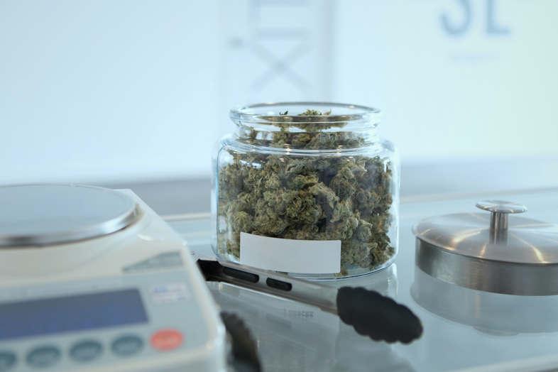 Voici ce qu'est le paillage pour la culture du cannabis