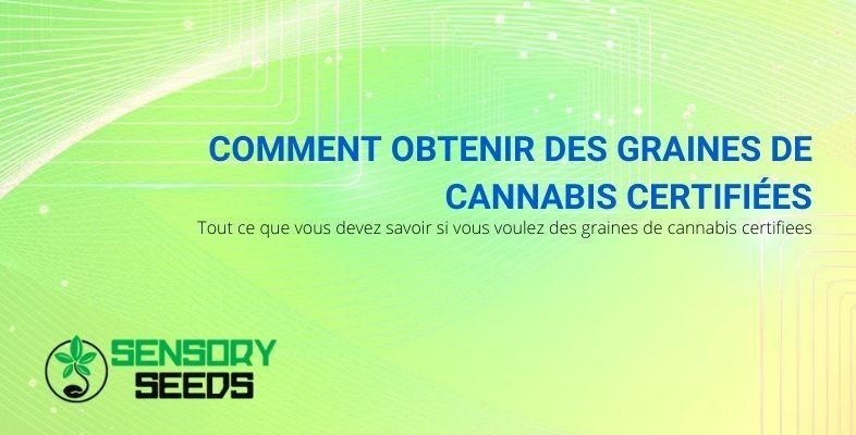 Comment obtenir des graines de cannabis certifiées