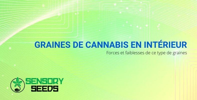 Graines de cannabis en intérieur : forces et faiblesses de ce type de graines