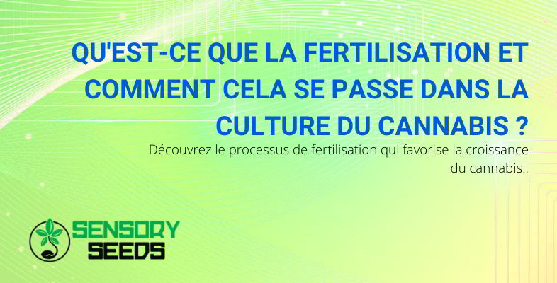 la fertilisation du cannabis