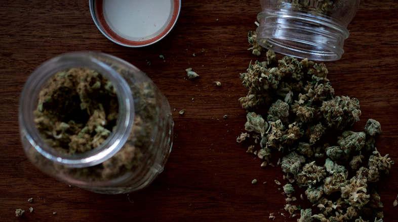 Les variétés de cannabis les plus précieuses