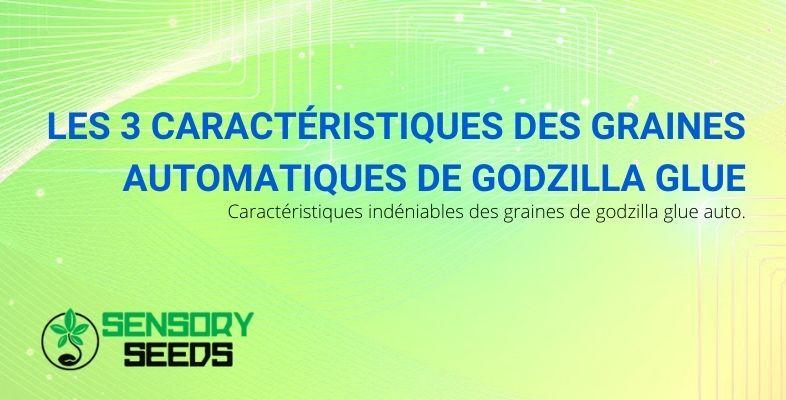 Godzilla Glue Seeds Automatic: les trois caractéristiques à connaître
