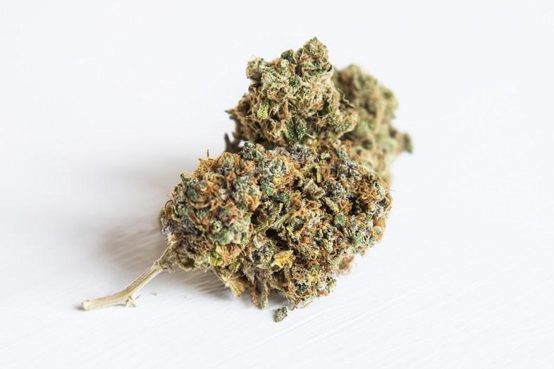 Prenons un aperçu du cannabis Lemon Thai