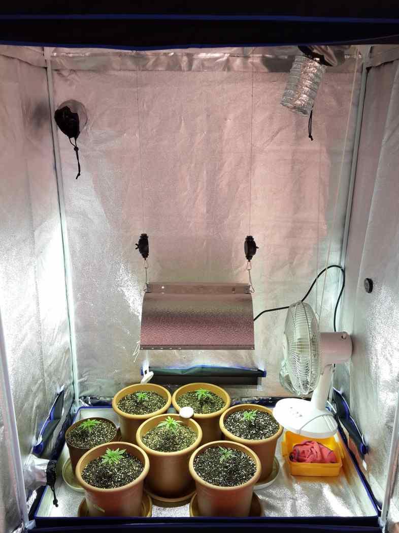 La microculture pour qui est utile et ce que c'est!