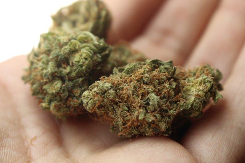 """Et voici """"Amnesia"""" l'une des meilleures variétés de cannabis au monde"""