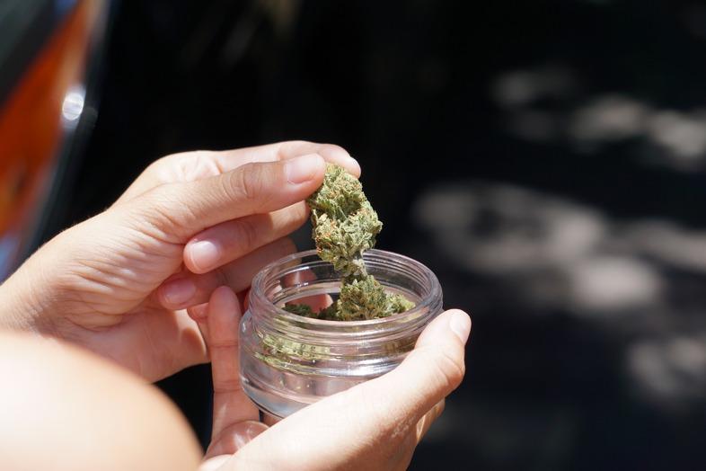 Le bronzage de la marijuana dans des bocaux en verre