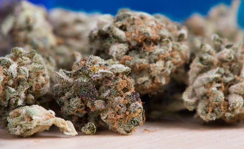 Toutes les caractéristiques de la marijuana mère de graines Double Cookies: Do Si Dos