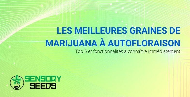 Les caractéristiques communes des meilleures graines de marijuana à autofloraison
