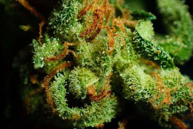 Résine de marijuana: qu'est-ce que c'est?
