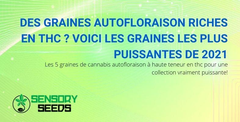 Les 5 graines de cannabis puissantes de 2021
