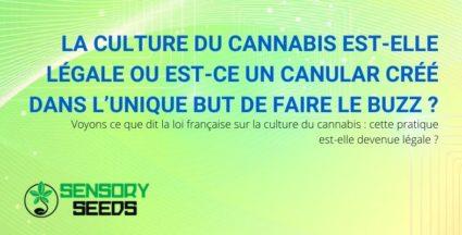 La culture du cannabis est-elle légale ou est-ce un canular?