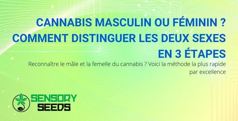 Comment distinguer le cannabis masculin du cannabis féminin