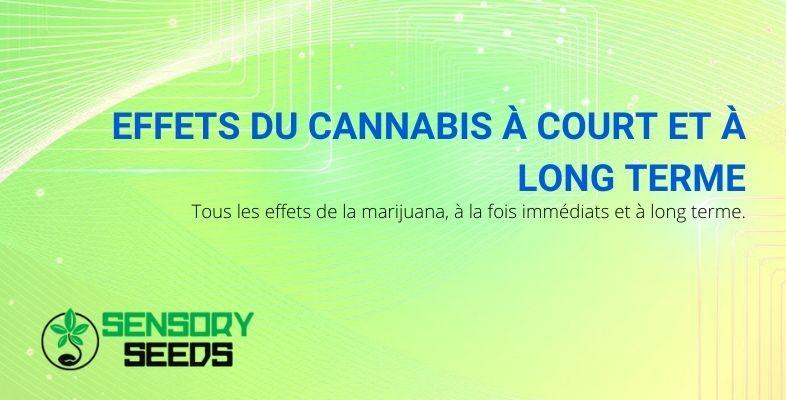Les effets du cannabis à court et long terme