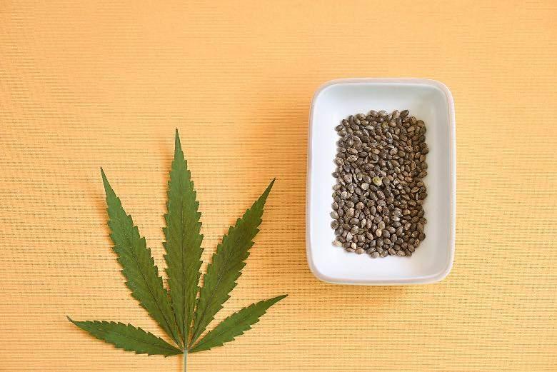 Graines de cannabis autofloraison de forme ovale