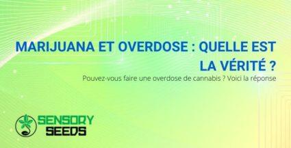Est-il possible de faire une overdose de marijuana ? La réponse.