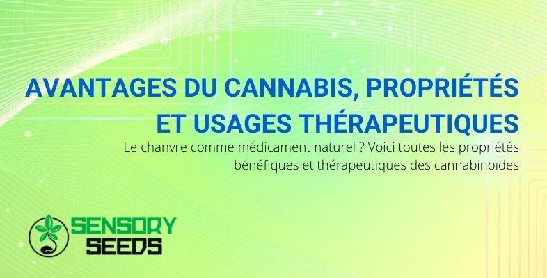 Les propriétés, avantages et usages thérapeutiques du cannabis
