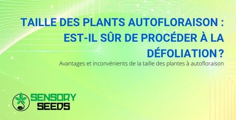 Peut-on tailler les plantes autoflorissantes en toute sécurité ?