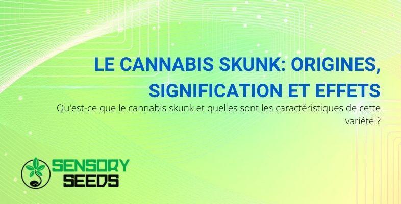 La signification, les origines et les effets du cannabis Skunk