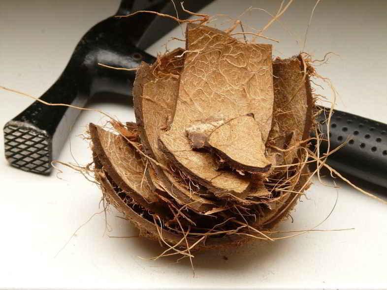 La fibre de coco : qu'est-ce que c'est ?