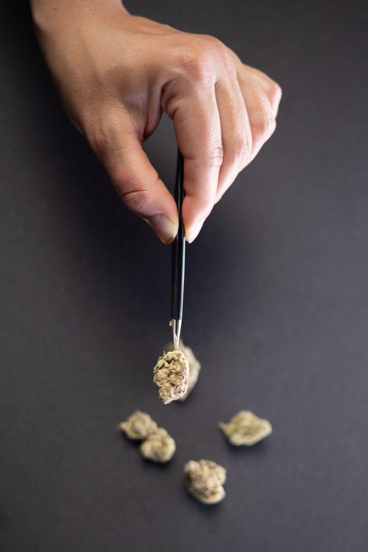 Acheter des graines de cannabis en Europe est légal