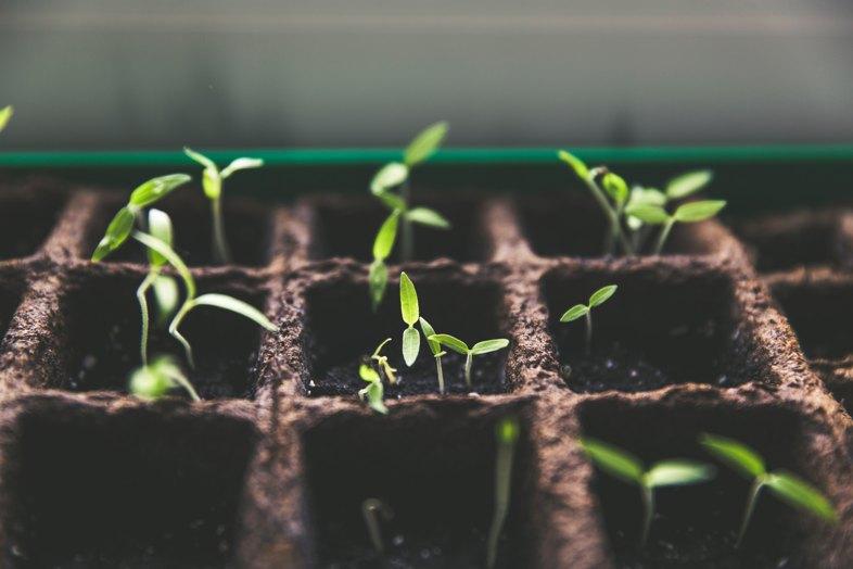 Là où c'est autorisé, comment peut-on planter des graines de cannabis ?