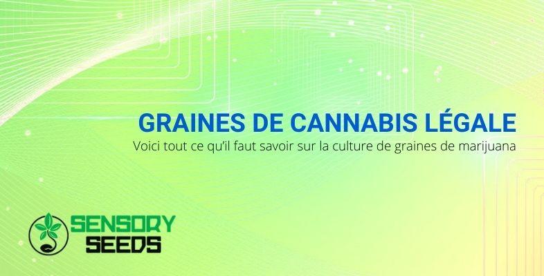 Tout sur la culture légale des graines de marijuana