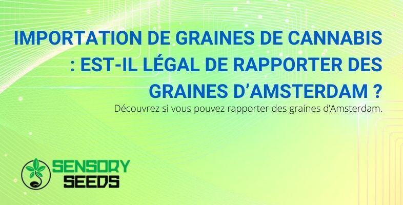 Peut-on importer des graines de cannabis d'Amsterdam ?