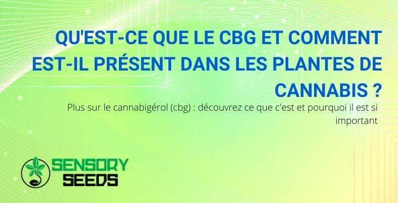 Découvrez ce qu'est le CBG et quel rôle il joue dans la plante de cannabis