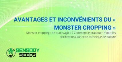 Les avantages et inconvénients et précisions sur le Monster Cropping