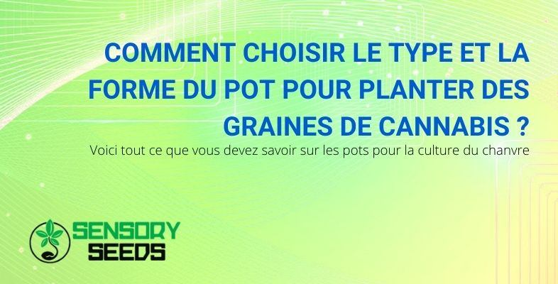 Comment choisir le type de pot pour planter des graines de cannabis ?