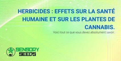 Les effets nocifs des herbicides sur la santé des humains et des plants de cannabis