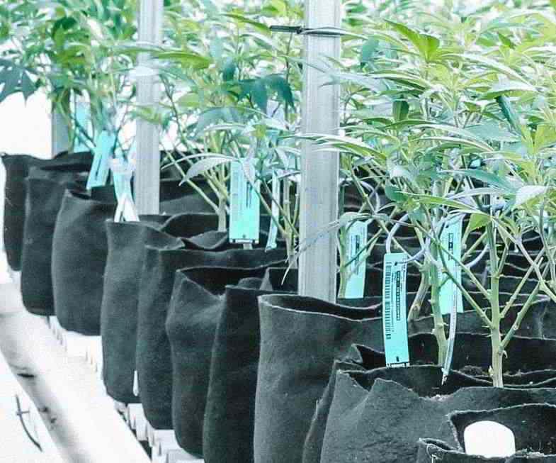 Forme de pot irrégulière : contenants en tissu pour cannabis