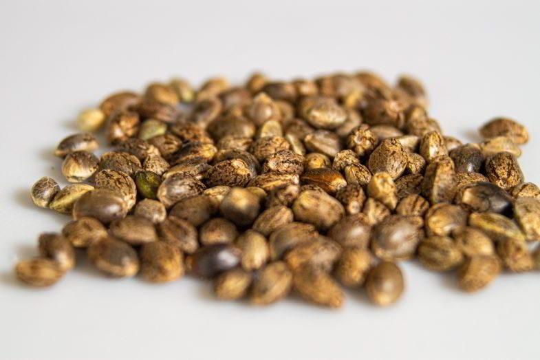 Où stocker les graines de cannabis ?
