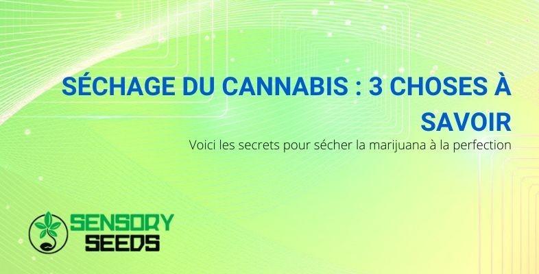 Comment sécher parfaitement le cannabis